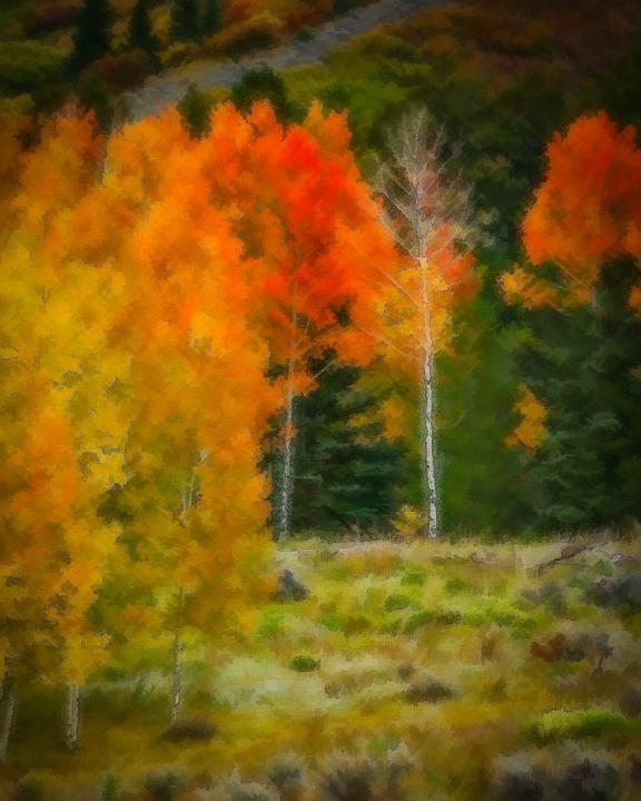 Fall Foliage, 2012
