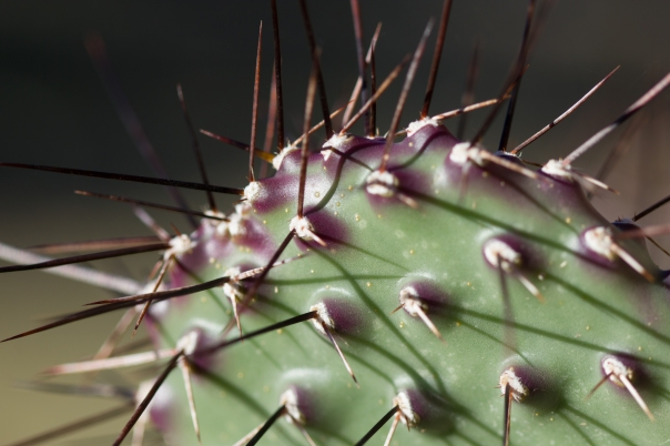 Cactus, Close Up